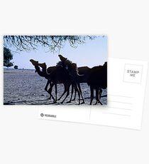 Camel Postcards