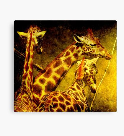 Giraffes galore Canvas Print