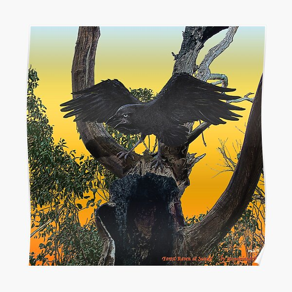 GALLIMAUFRY ~ JUST PHOTOS ~ SCENES & SCENERY ~ D1G1TAL-M00DZ ~ Forest Raven at Sunset by tasmanianartist Poster