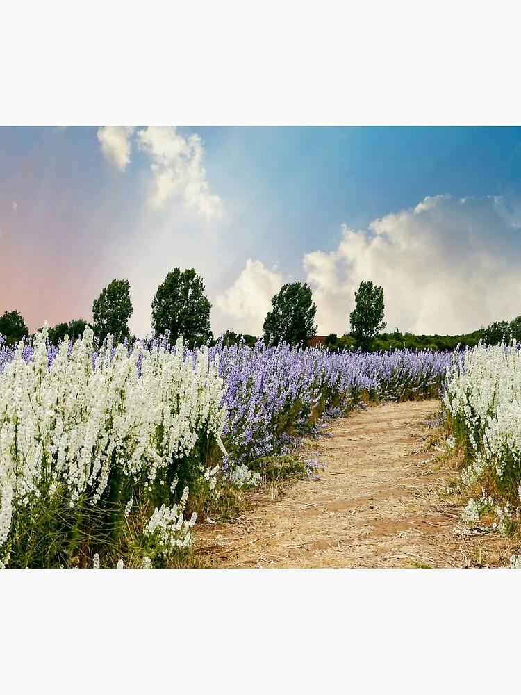 Coloured Landscape by ScenicViewPics