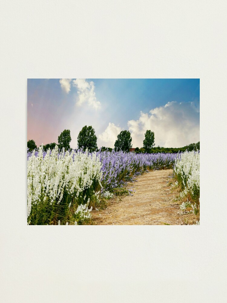Alternate view of Coloured Landscape Photographic Print