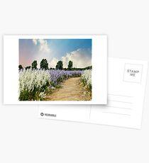 Coloured Landscape Postcards