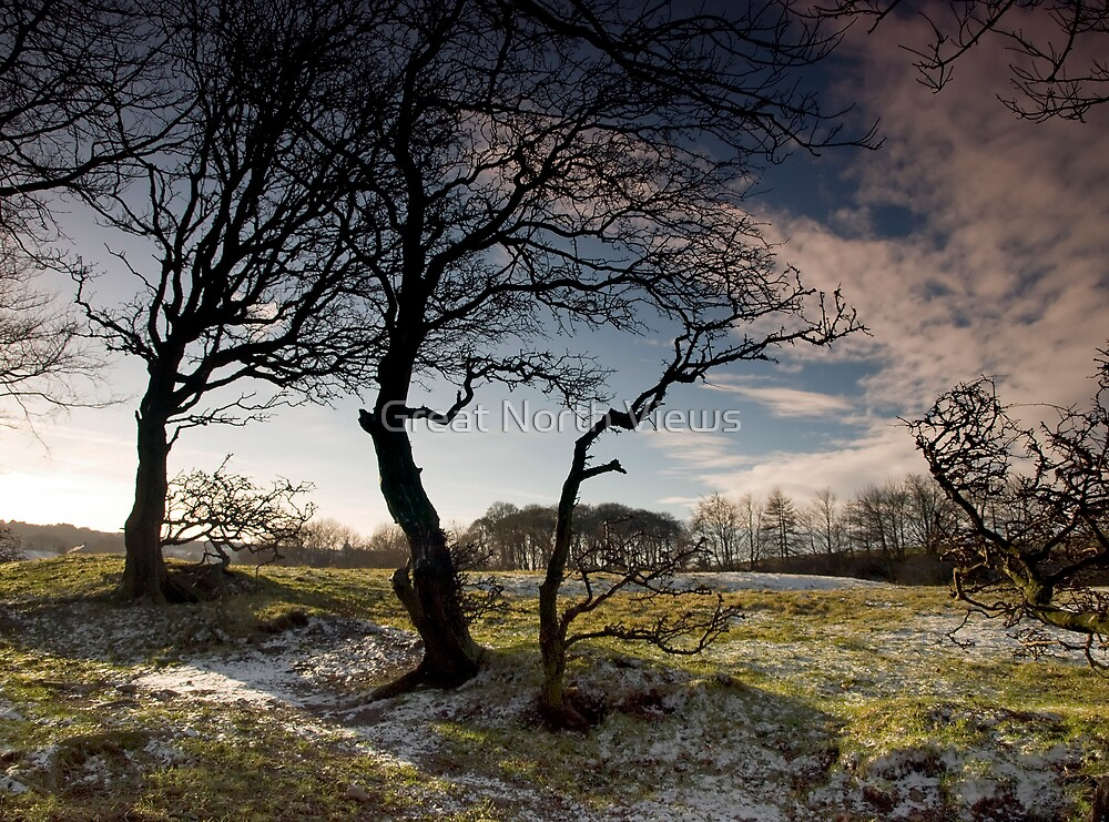 Beamish Trees II by Great North Views