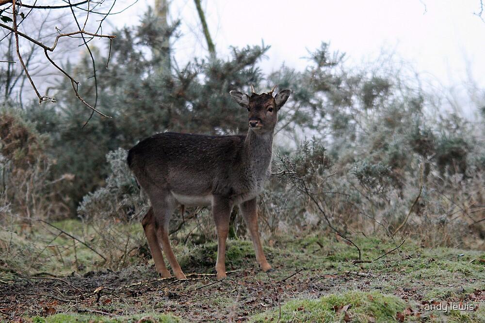 Deer by andy lewis