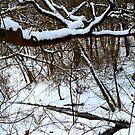 Stream in Winter.... by Larry Llewellyn