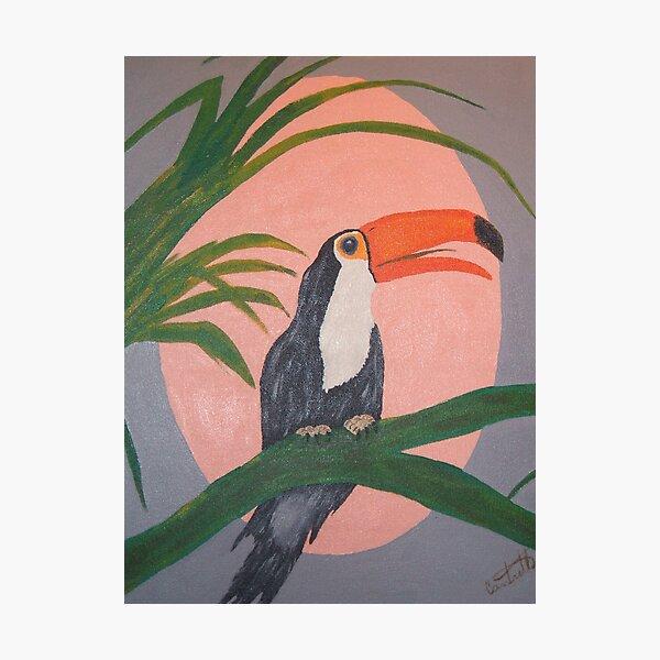 Toucan Photographic Print