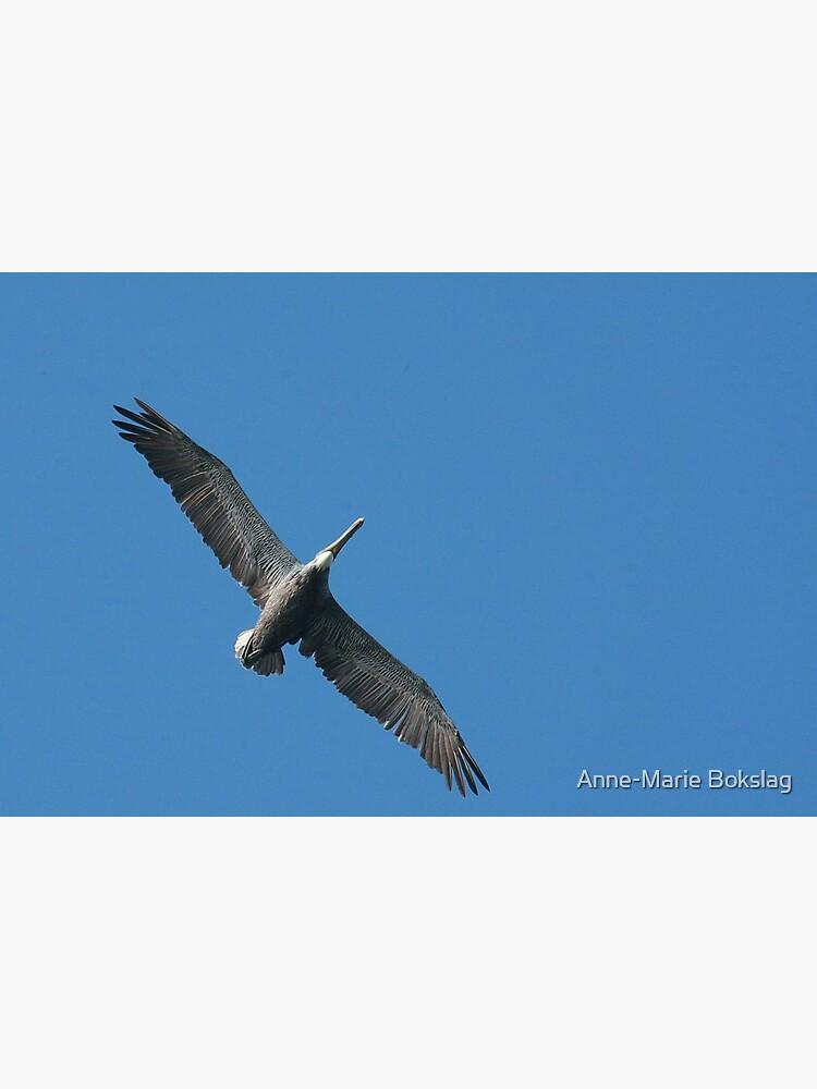 Pelican Flight by amb1946