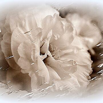 Floral Dream by GretaM