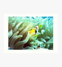 Clownfish Sharm Art Print