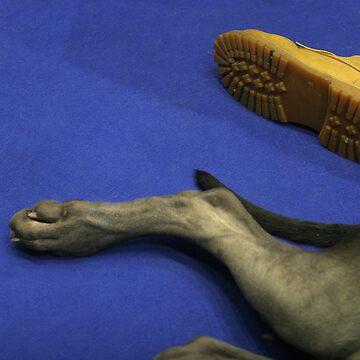 Dog's leg by skukucka