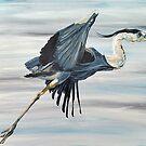 Great Blue Heron, Bird Flying by Melissa Fryer
