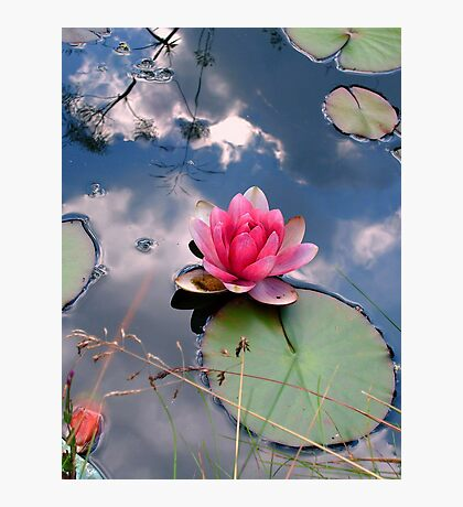 Lily in a reflected sky Photographic Print