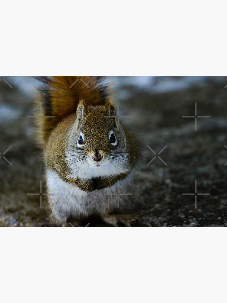Squirrel Day by debfaraday