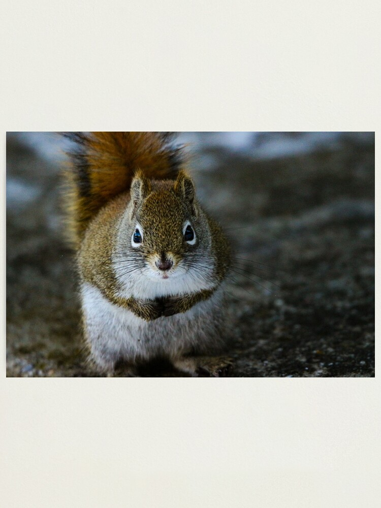 Alternate view of Squirrel Day Photographic Print