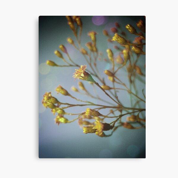 Sunday flowers Canvas Print