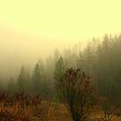 Early Morning Fog by Cricket Jones