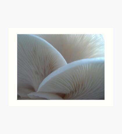 Oyster Mushrooms Art Print