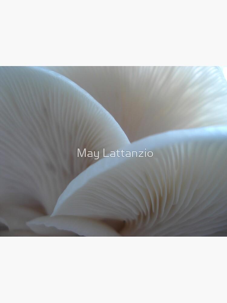 Oyster Mushrooms by MayLattanzio