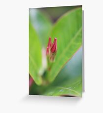 Plant close-up Greeting Card