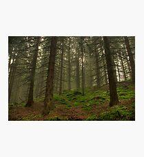 Hobbits Land Photographic Print