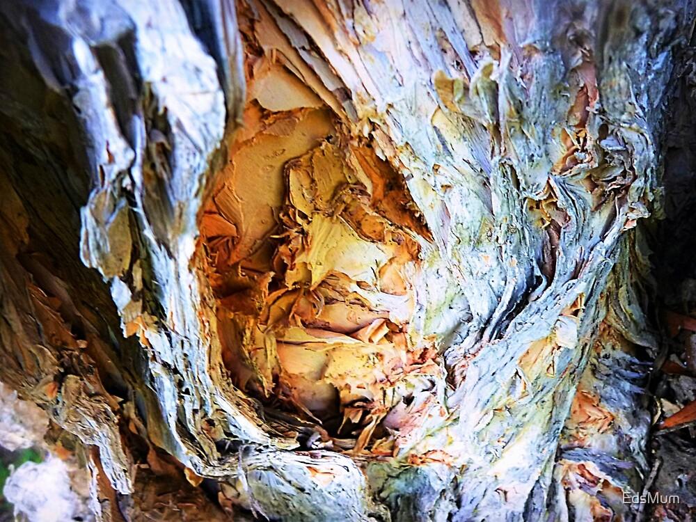 Paper Bark Tree - backyard by EdsMum