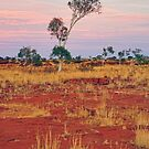 Outback Evening by Harry Oldmeadow
