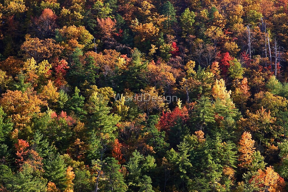 A Slice of Fall by WorldDesign
