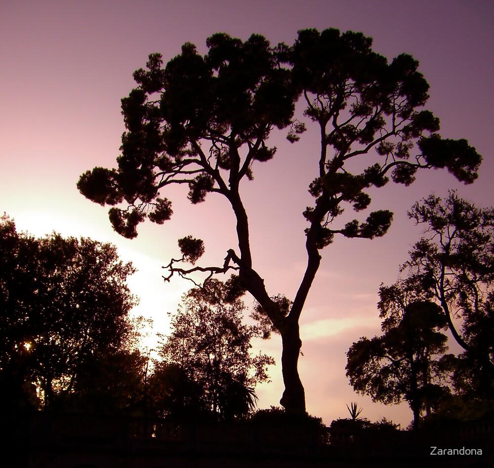 Sunset over Nizza by Zarandona