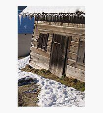 Hibernation Photographic Print