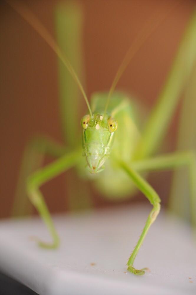Mantis by Reciprocity