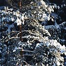 Winter 7 by Antanas