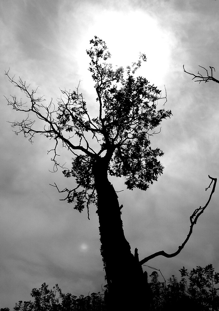 Haunting silhouette... by AnnetteW
