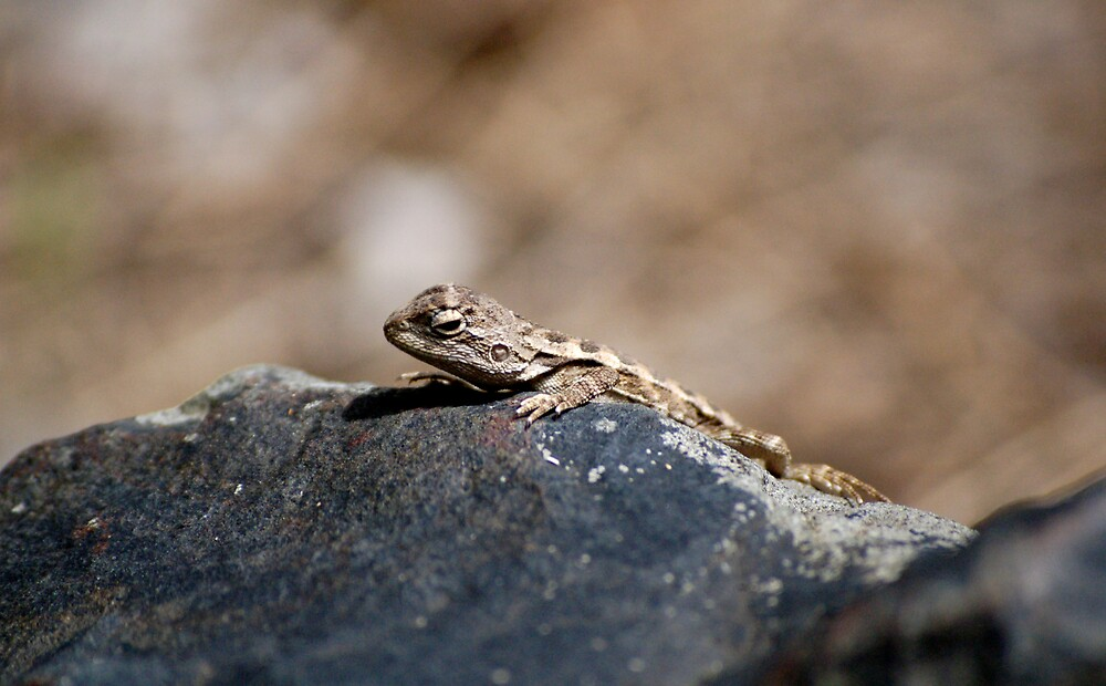 Smalll reptile catching some sun... by Luke87