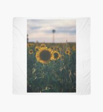 Sunflowers in a field in the afternoon. Scarf