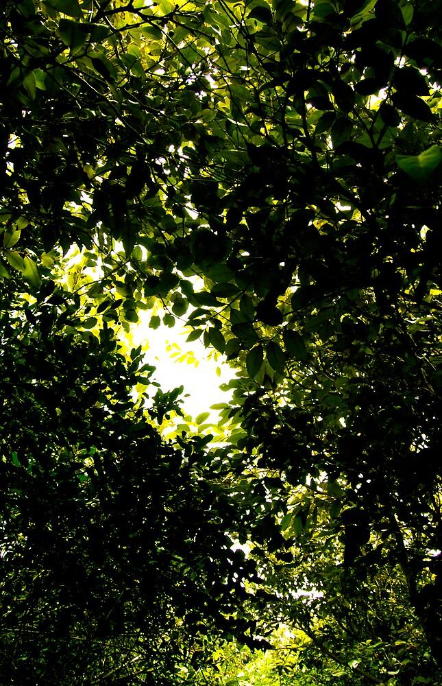 Leaves overhead by Luke87
