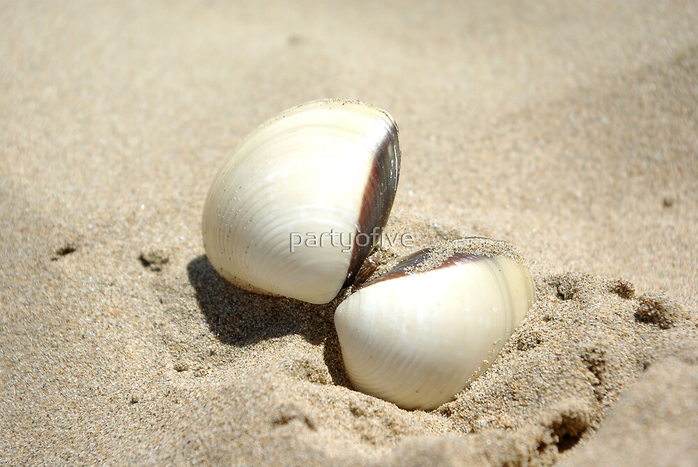 sea shell... by partyofive