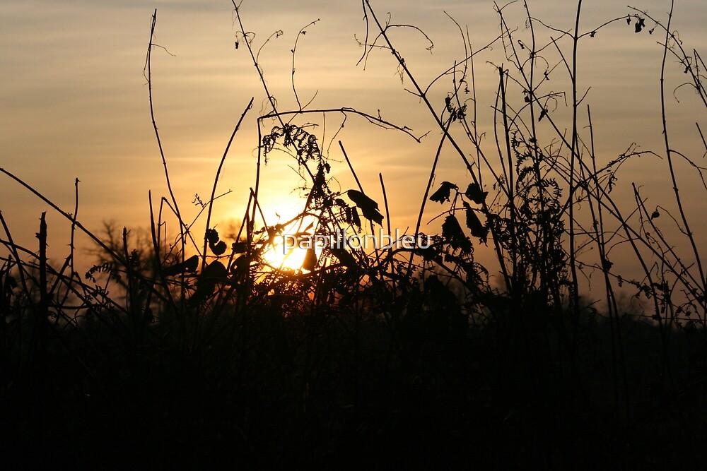 Sunset Silhouettes - Brambley Hedge by Pamela Jayne Smith