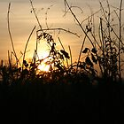 Sunset Silhouettes - Brambley Hedge by Pamela Jayne Smith
