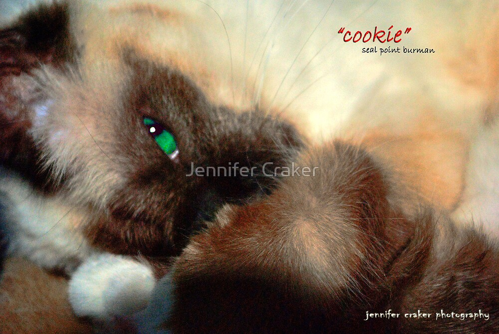 Cookie by Jennifer Craker