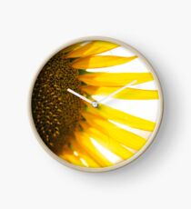Sunflowers in a field in the afternoon. Clock