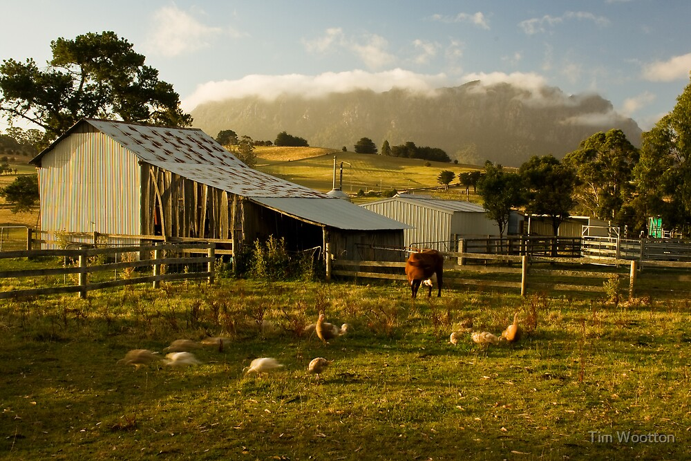The Farmyard by Tim Wootton