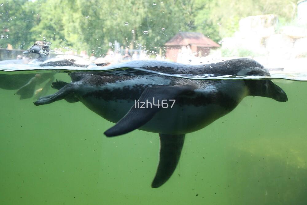 Swimming Alongside a Penguin by lizh467