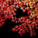 Autumn Maple by Joseph Tame