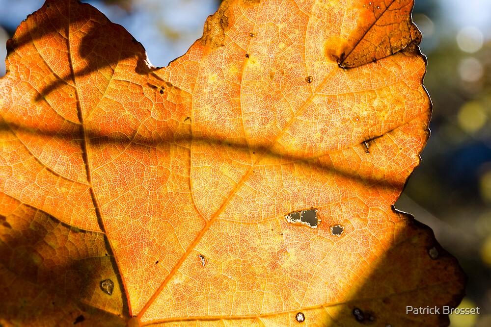 orange autumn leaves by Patrick Brosset