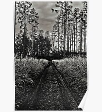 autumnal sunny black and white afternoon forest road Poster