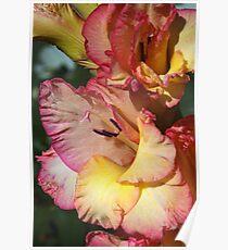 Gladiolus Delight Poster