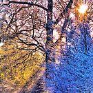 Frosty by Terence J Sullivan