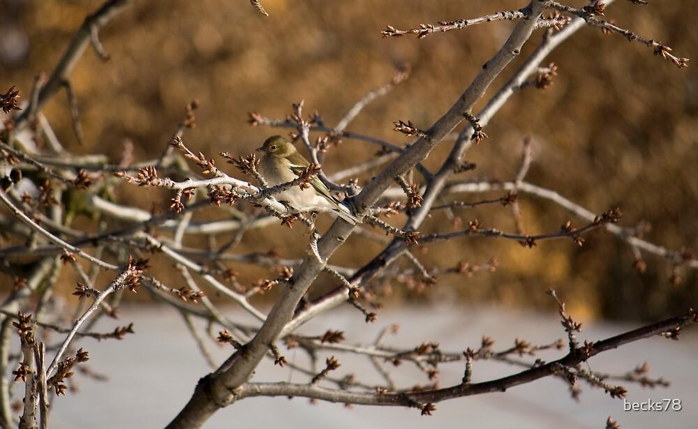 Sparrow by becks78