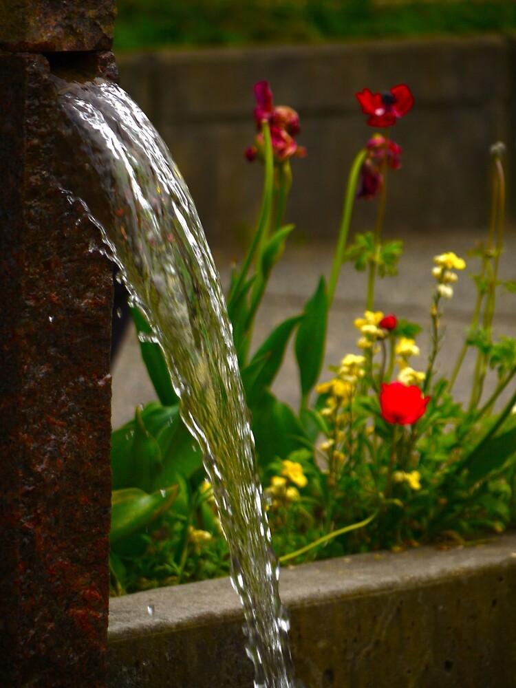 Fountain by Rae Tucker