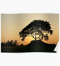 Sunset with a Tree Poster